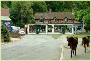 Burley village new forest on a personalised postcard