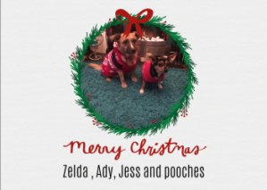 Using your pet dogs for Christmas cards
