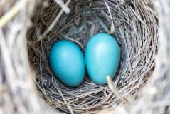 easter egg nest hunt postsnap