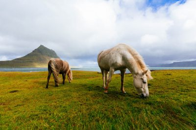 Iceland should be on your bucket list of places to visit